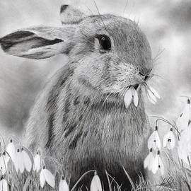 James Schultz - Rabbit Eating Flowers Drawing