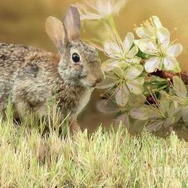 Eastern Cottontail Rabbit in Grass by Janette Boyd