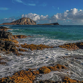 Richard Cheski - Rabbit Island