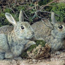 John Sherrin - Rabbits