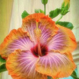 Sue Melvin - Radiant Hibiscus