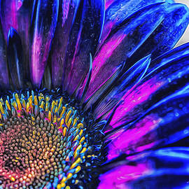 Radiant Possibilities by Jessica Manelis