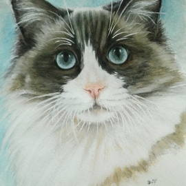 Ragdoll Portrait in Watercolor by Barbara Keith