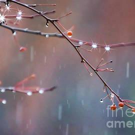 Janice Rae Pariza - Rain Drops on Berries