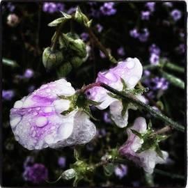 Jim James - Rain Kissed Petals. This Flower Art