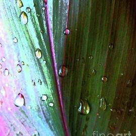 Barbie Corbett-Newmin - Rain on Rainbow Leaf