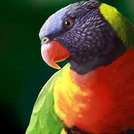 Rainbow Lorikeet - KC Gillies