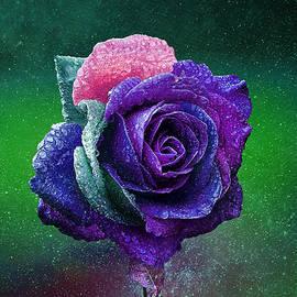 Rainbow Rose Among the Stars by Ericamaxine Price