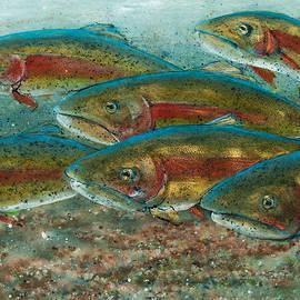 Rainbow Trout Fish Run by Jani Freimann