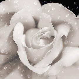 Jennie Marie Schell - Raindrops on Sepia Rose Flower