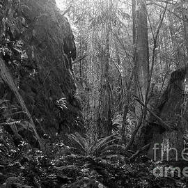 Rainforest Black And White by Sharon Talson