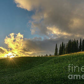 Rainier Sunstar Meadows - Mike Reid