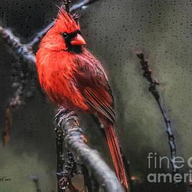 Tina LeCour - Rainy Day Cardinal