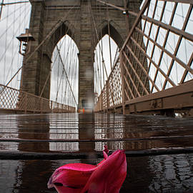 Rainy Day On The Brooklyn Bridge Brooklyn New York Tulip Petals by Toby McGuire