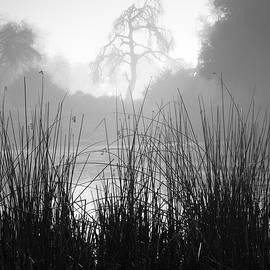 William Dunigan - Ramona Pond Grass and Tree
