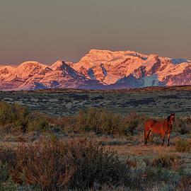 Stuart Litoff - Ranch Dawn - Patagonia