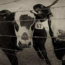 Range Cattle by Elena Verovoy
