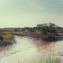 Rantowles Creek Southern Marsh by Dale Powell