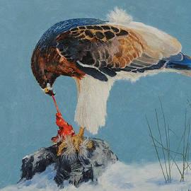 Raptor by E Colin Williams ARCA