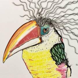 Curl-crested Toucan - Reggae Man