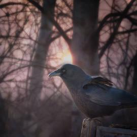 Susan Capuano - Raven Dawn