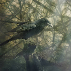 Susan Capuano - Raven Forest