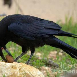 Raven Rock by Tru Waters