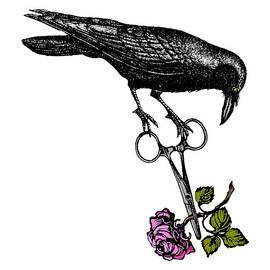 Raven Steals The Gardener's Rose by Sandra McGinley