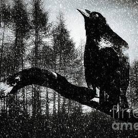 KaFra Art - Raven Woods