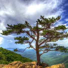 Greg Reed - Ravens Roost Tree
