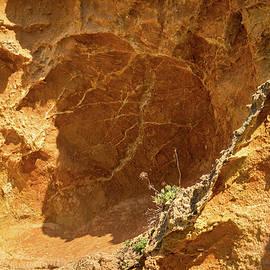 Georgia Mizuleva - Raw Geology - Dainty Flowers and Rough Rocks Juxtaposition