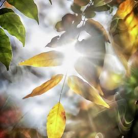 Ray Of Hope by Az Jackson