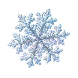 Alexey Kljatov - Real snowflake - Hyperion white