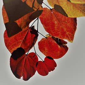 Carrie Goeringer - Red and Gold Leaves