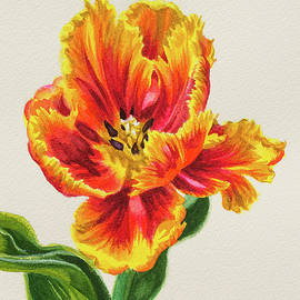 Red and Yellow Parrot Tulip 1 by Fiona Craig