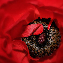 Dazzling In Red by Carol Eade