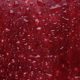 Red Apple Skin - Steve Gadomski