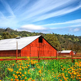 Lynn Bauer - Red Barn and Orange Poppies