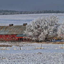 Red Barn in Winter by Alana Thrower