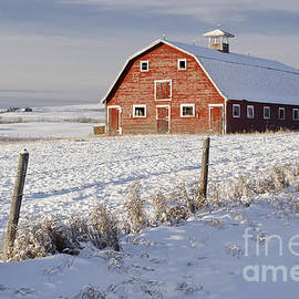 Red Barn In Winter Coat by Dee Cresswell