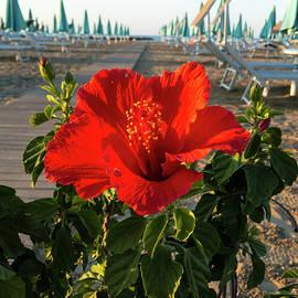 Marina Usmanskaya - Red Beach Flower