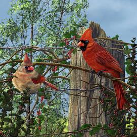 Martin Wilneff - Red Berries Northern Cardinals