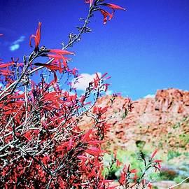 Anna Jasper - Red bloom