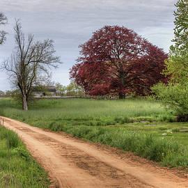 Steve Gravano - Red Dirt Road and Maple