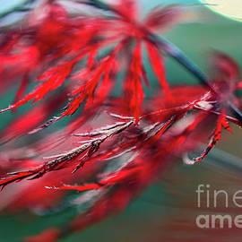 Jean OKeeffe Macro Abundance Art - Red Dragon Flies