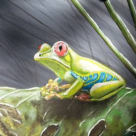 Red-eyed frog by Judit Szalanczi