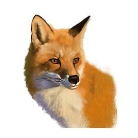 Arie Vanderwyst - Red Fox