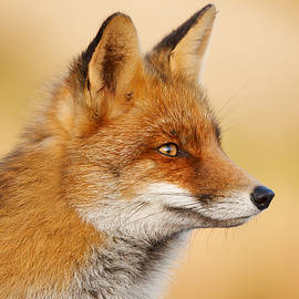Roeselien Raimond - Red Fox Face