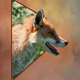 Red Fox - Out of Box by Ericamaxine Price
