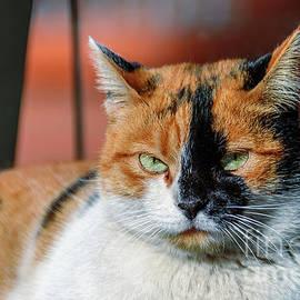 Red-headed cat by Viktor Birkus